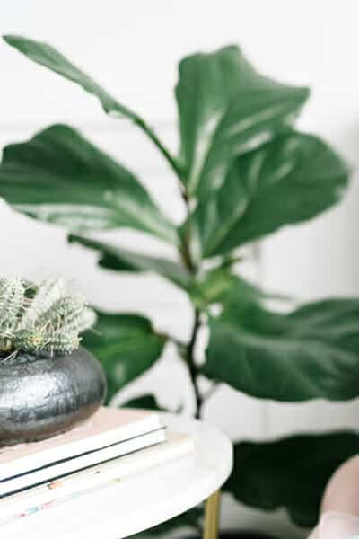 feng shui 101: the wood element includes plants, trees, flowers, and wood furniture