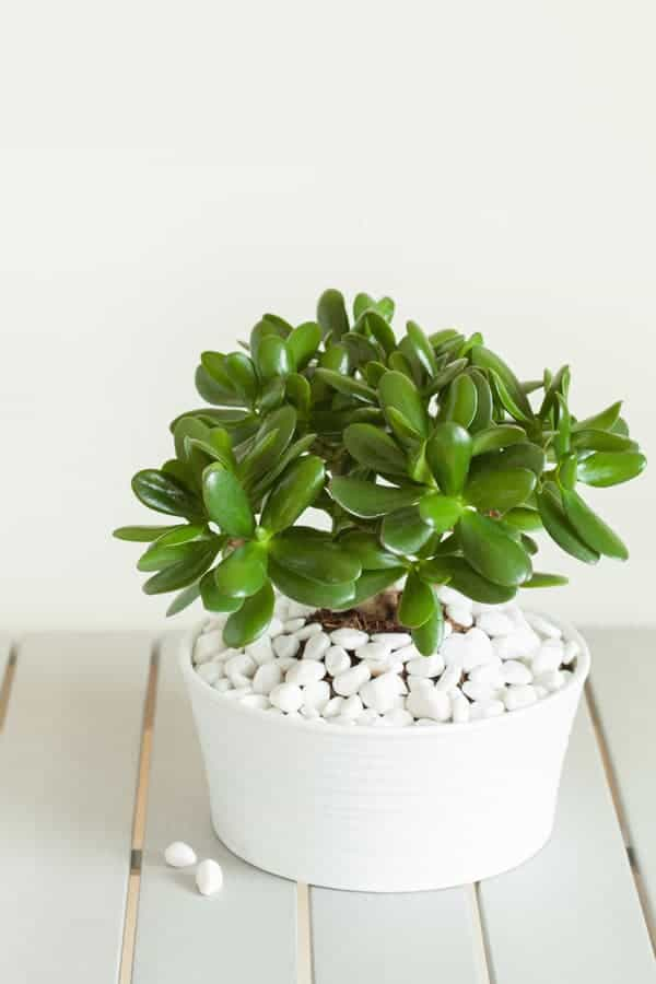 feng shui money tips: add live plants!