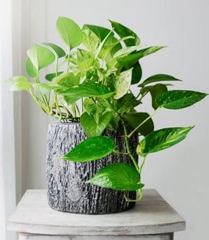 basic feng shui principle: add a plant!