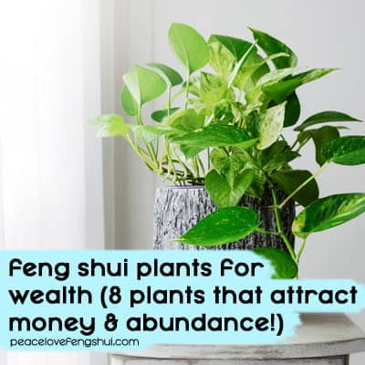 add these feng shui plants to your home for more money!