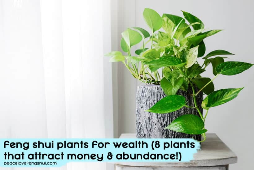 add these plants to your home to increase wealth and abundance!