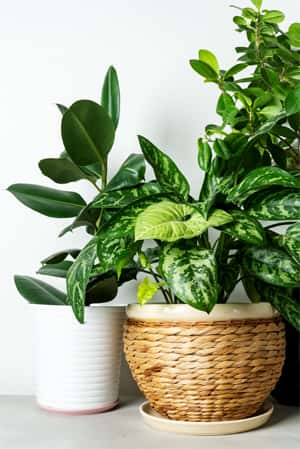 adding plants increases the good energy