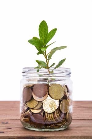 plants raise feng shui prosperity