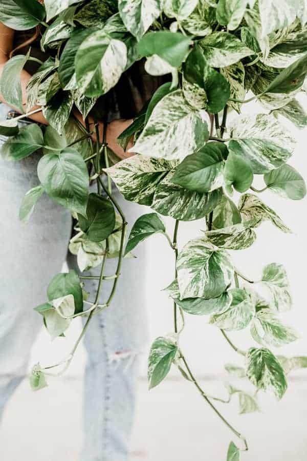 feng shui health plants
