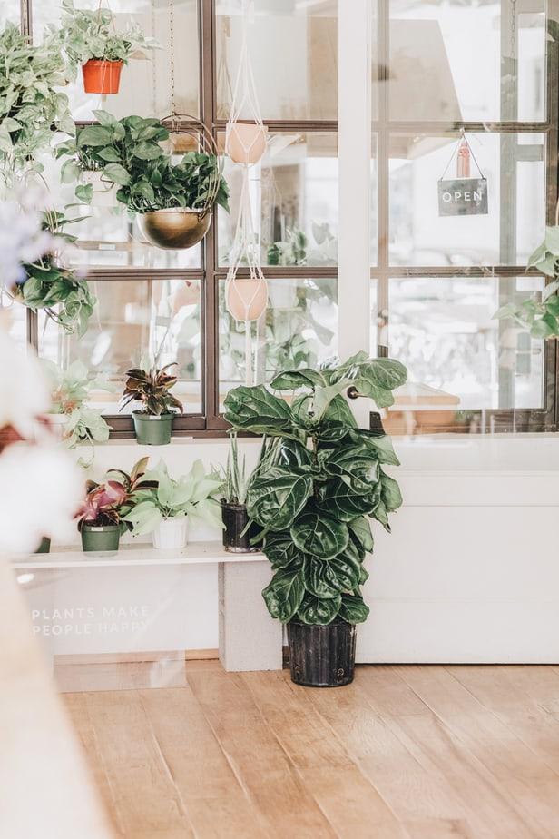 best feng shui plants health