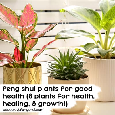 feng shui plants for good health