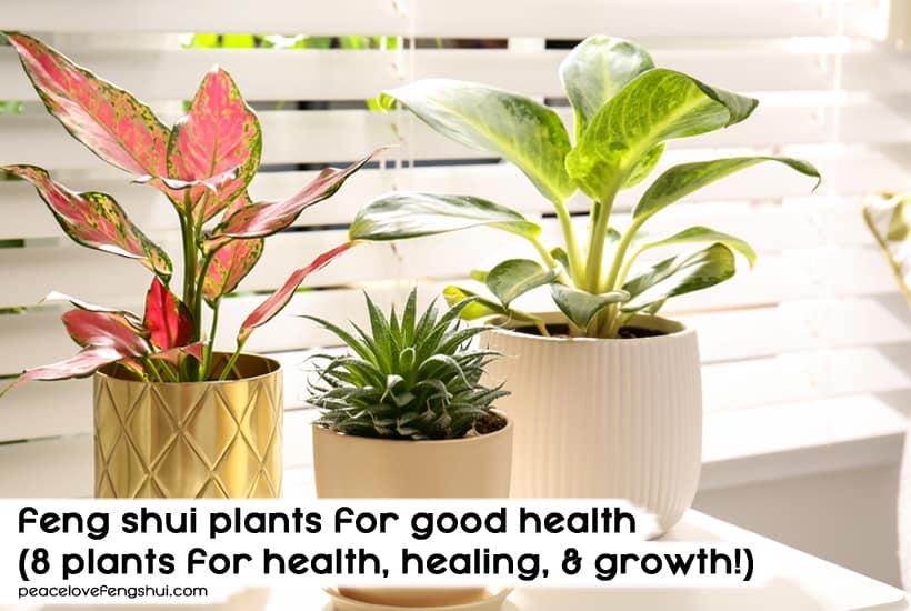 feng shui plants for good health