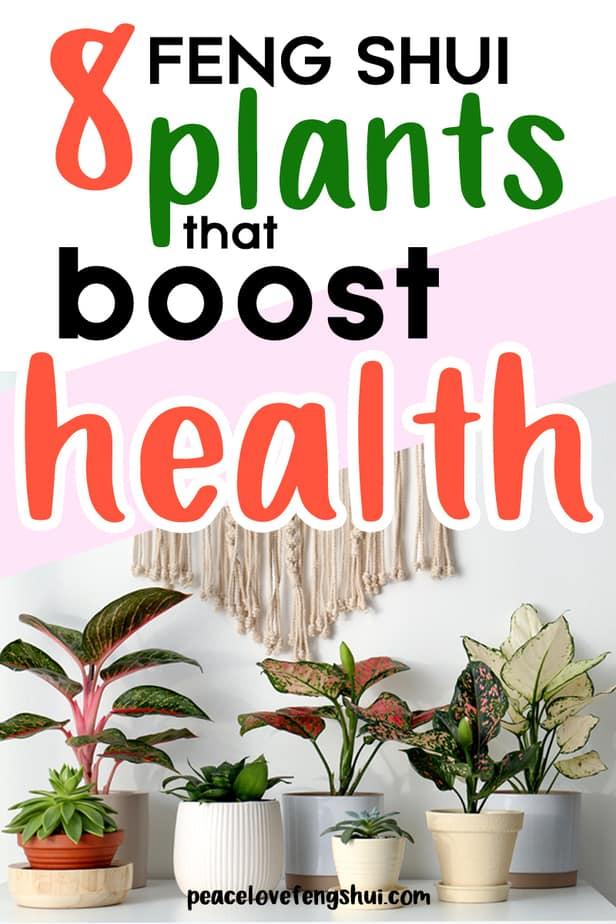 feng shui plants increase health