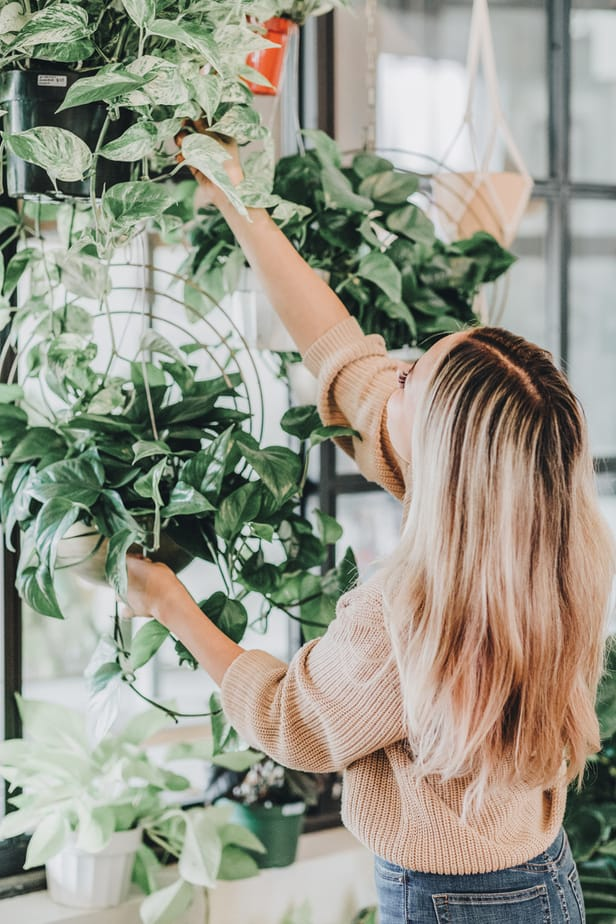 which plants boost health