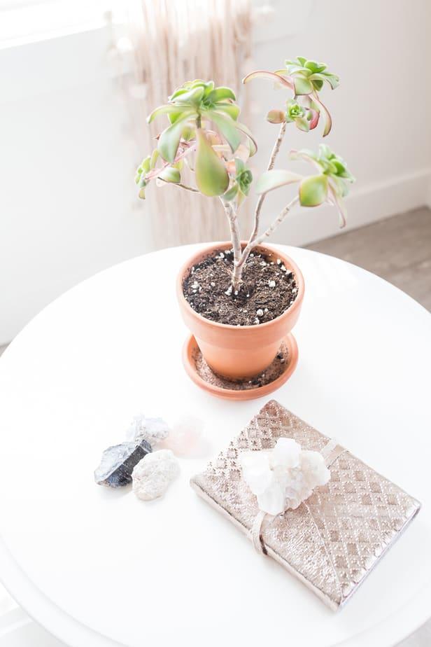 change bad luck plants