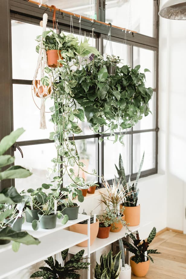which plants bad for health