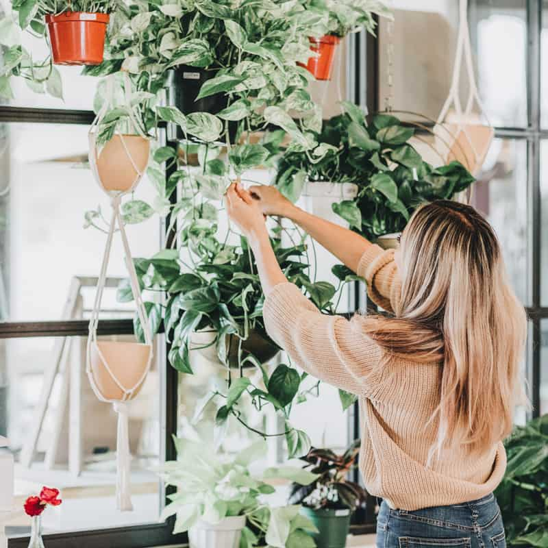 maintaining plants feng shui