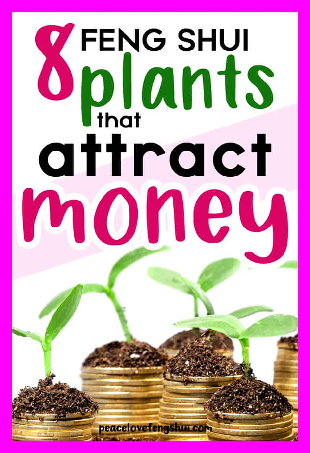 8 feng shui plants attract wealth