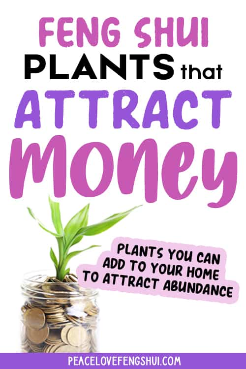 8 feng shui plants attract money